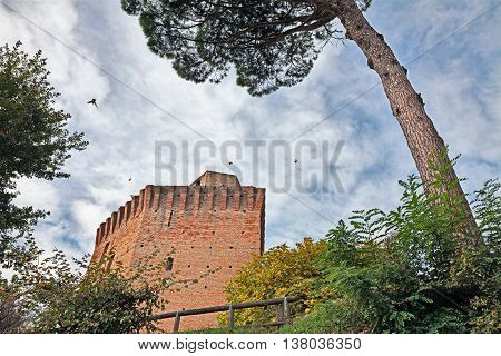 Oriolo dei Fichi, Faenza, Emilia Romagna, Italy: medieval tower surrounded by pine trees and bushes in the ancient village