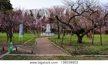 Cherry Blossom And Religious Statue At Maruyama Park