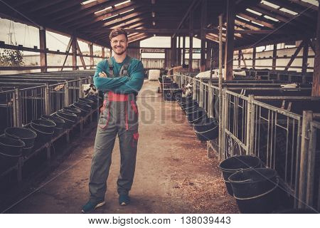 Young farmer feeding in the cowshed in dairy farm.