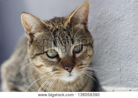 gato animal felino miao miao miao miao poster