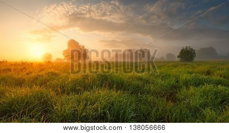 Summer misty morning, colorful foggy sunrise on meadow