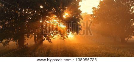 Morning sunlight in a forest, misty sunrise