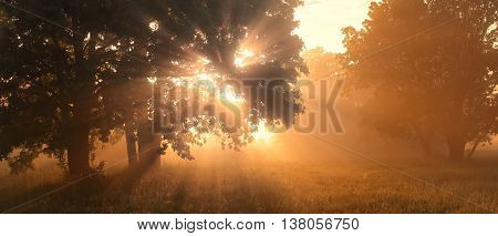 Morning sunlight in a forest, misty sunrise