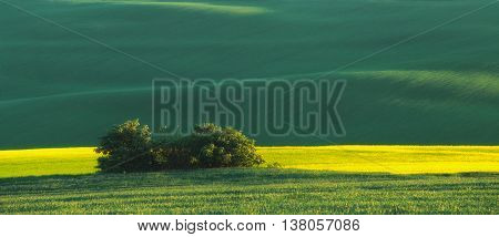 Bright summer sunset, color summer ground waves