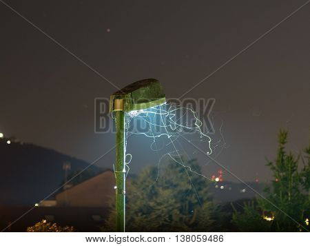 Light trails of Mosquito (midge fly of family Culicidae) insects dancing under a street light at night
