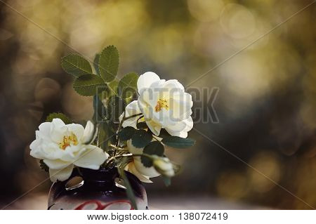 Bouquet of white dogrose in a vase.