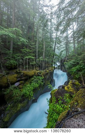 Water Rushes through the Carved Stone of Avalanche Creek through green forest