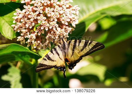 Butterfly on the flowers in summer