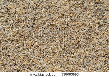 Beach sand grains creating an interesting texture in close-up.