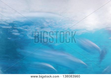 blur fish swimming against blue sea abstract nature background