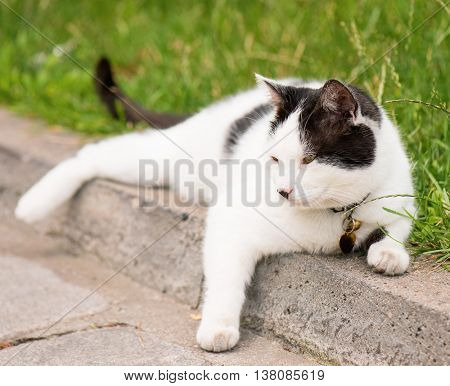 Adult white and black cat lying in the street on the roadside