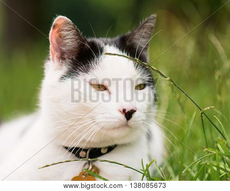 Adult white and black cat lying in the street on the roadside. Close up photo.