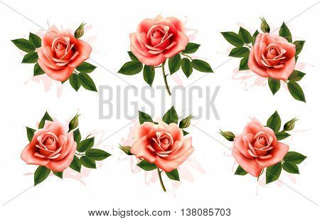 Beautiful set of pink ornate roses with leaves. Vector.