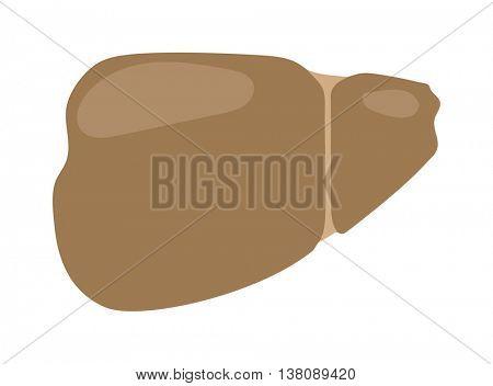 Human liver vector illustration.