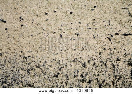 Mold On Concrete 1