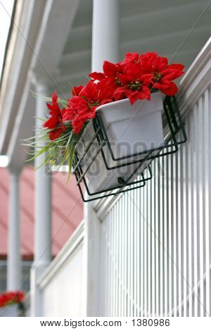 Red Flowers On White Porch
