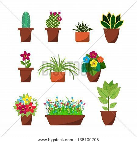 House plants and flowers for interior decoration flat icons collection. Home pot plant and tree plants with flowers and leaves. vector illustration in flat design