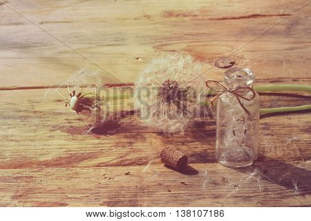 summer dandelion on wooden table small bottle with seeds retro rustic style sunlight
