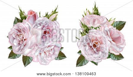 Set. Bouquet of flowers. Rosa pastel pink old style. Flower composition. Isolated on white background.