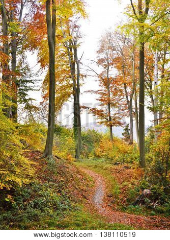 Autumn forest with copy space. View of a single lane road in an autumn forest.