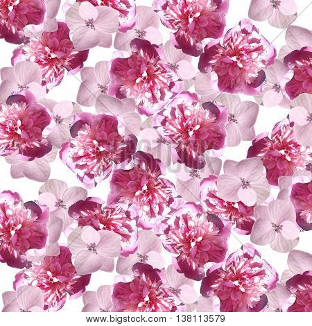 Beautiful floral background with peonies and hydrangeas