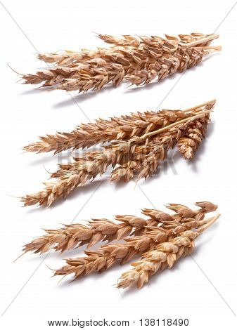Set Of Wheat Ears (triticum Spp), Clipping Paths