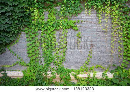 green climbing plant on brick wall