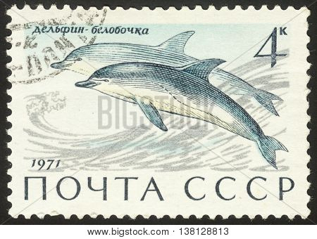 MOSCOW RUSSIA - DECEMBER 2015: a post stamp printed in the USSR shows Delphinus delphis the series
