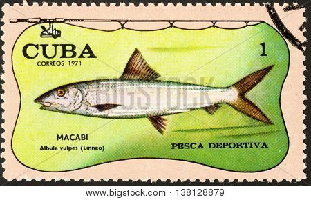 MOSCOW RUSSIA - DECEMBER 2015: a post stamp printed in CUBA shows a fish with the inscription MACABI albula vulpes (Linneo) the series