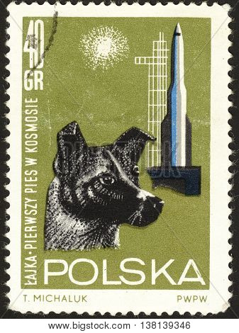 MOSCOW RUSSIA - DECEMBER 2015: a post stamp printed in POLAND shows a dog the series