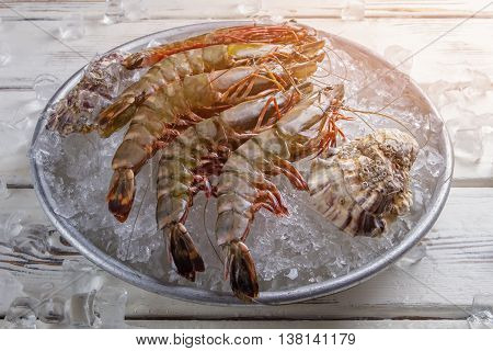 Shrimps with seashells on ice. Raw shrimps on ice cubes. Exotic seafood cooked at restaurant. Healthy and tasty food.