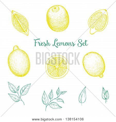 Vector hand drawn lime or lemon set. Top view. Drawn in ink.