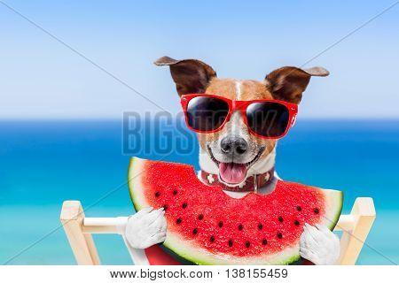 Dog Summer Beach
