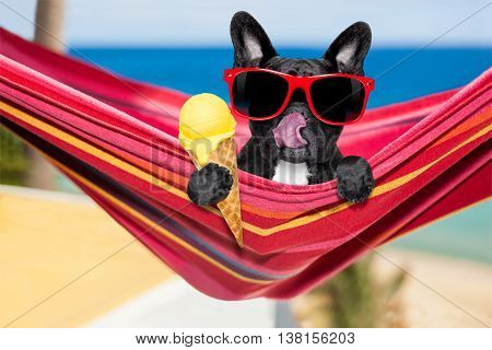 Dog On Hammock And Ice Cream