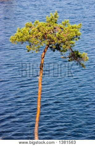 Tree Above Lake