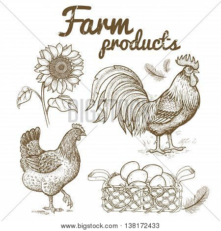 Farm set poultry rooster and hen basket with eggs sunflower bird feathers. Series of farm animals. Vintage engraving style. Nature. Sketch. Isolated fowls on white background. Vector illustration.
