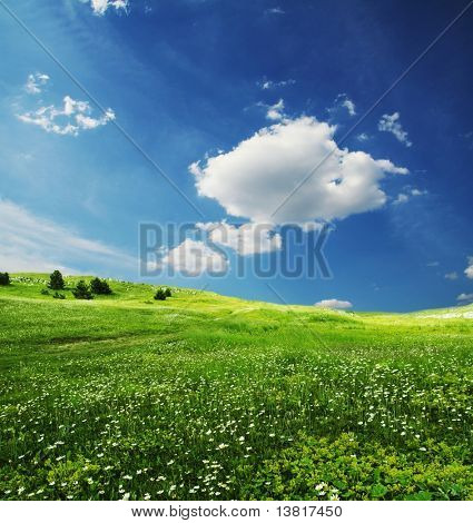 Green grassland and sky in the morning