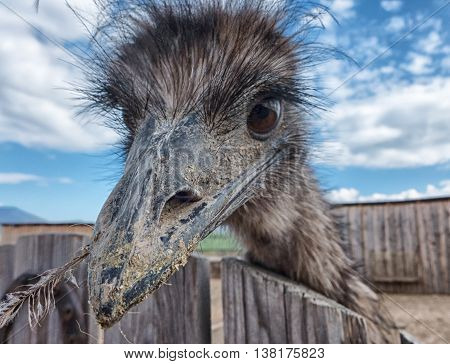 Curious young Ostrich in Zoo at SLovakia