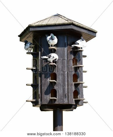 Wooden dovecote with pigeons isolated on white background.