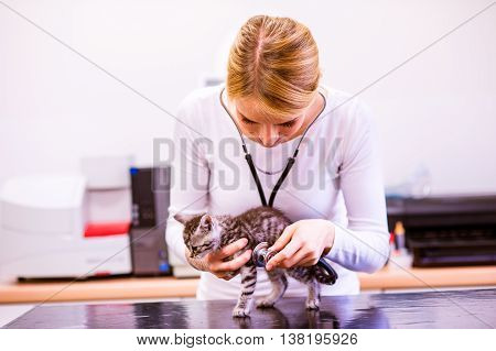 Veterinarian with stethoscope examining cat with sore stomach. Young blond woman in white uniform working at Veterinary clinic.
