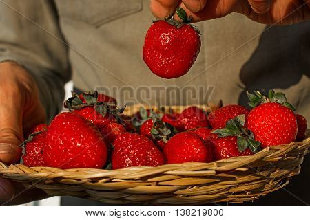 male hand picks one strawberry from wicker bowl full of strawberries close up. hand taking berry out of bowl