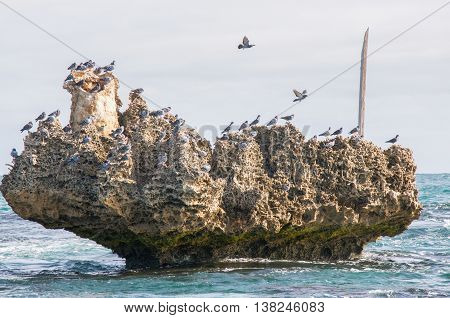 Limestone rock formation covered with Australian Rock Pigeons in the turquoise Indian Ocean waters under a cloudy sky in Rockingham, Western Australia.