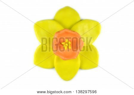 Modelling clay daffodil flower on white background