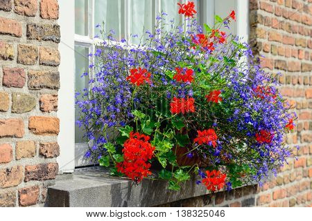 Red and blue blossoming plants in a flower box in the window sill of a historic house.