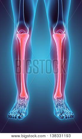 3D Illustration Of Tibia, Medical Concept.