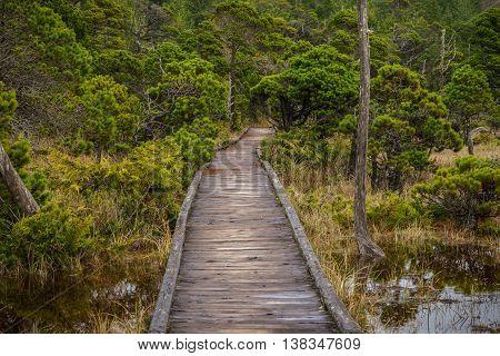 Shorepine Bog Trail Vancouver Island - Canada