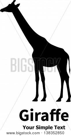 Vector illustration of a silhouette of a giraffe standing straight. Isolated on white background. Giraffe side view profile.