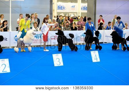 Moscow, Russia - June 25: Participants in the ring on the World Dog Show on June 25, 2016 in Crocus Expo Moscow