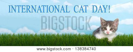 gray and white tabby kitten laying in green grass with blue background white clouds International Cat Day banner formatted for popular social media. National cat day is October 29th