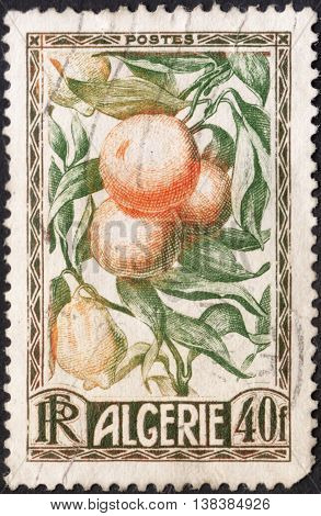 MOSCOW RUSSIA - JANUARY 2016: a post stamp printed in ALGERIA shows citrus fruit the series
